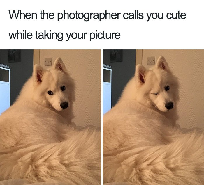 10 Of The Happiest Dog Memes Ever That Will Make You Smile From Ear