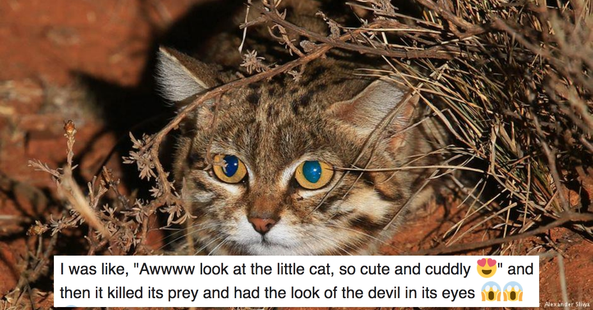 This Is World S Deadliest Cat And You Will Want To Hug Her