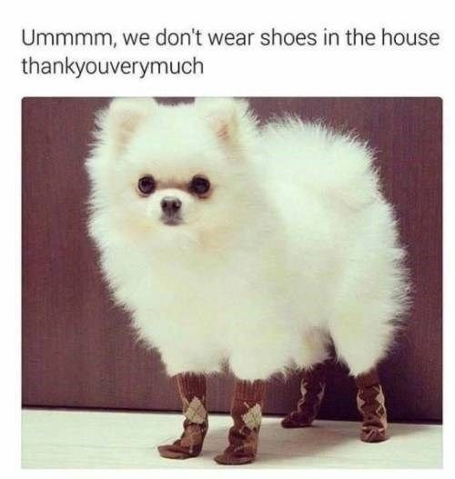 Image result for No shoes in the house